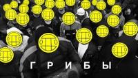 Интро - клип группы 591|Грибы (Grebz)